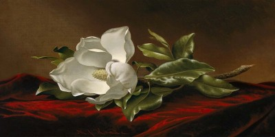 Nature and Opulence: The Art of Martin Johnson Heade