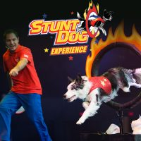primary-Chris-Perondi-s-Stunt-Dog-Experience-1484932647