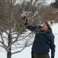 Winter Pruning Essentials Workshop