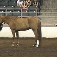 Wisconsin 4-H Horse Expo