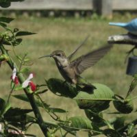 Birdscaping: Native Plant Gardens for Attracting Birds