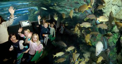 Free Admission to Discovery World on Earth Day