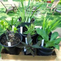 SouthEast Wisconsin Master Gardener Perennial Plant Sale