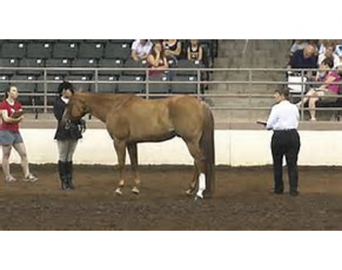 2019 Wisconsin 4-H Horse Show - Gymkhana
