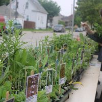 Community Planting Day & Native Plant Sale
