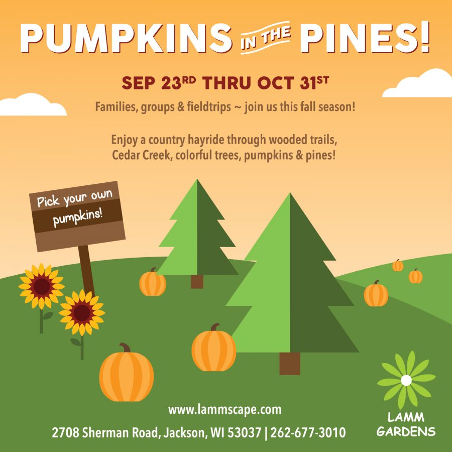Pumpkins in the Pines