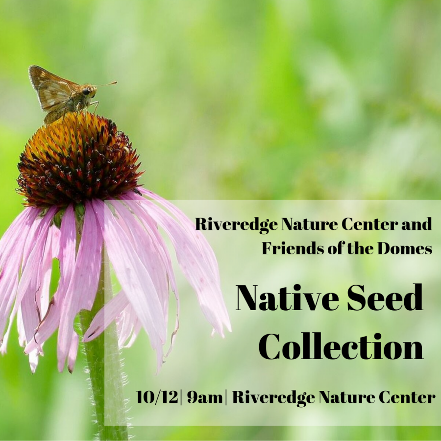 Native Seed Collection