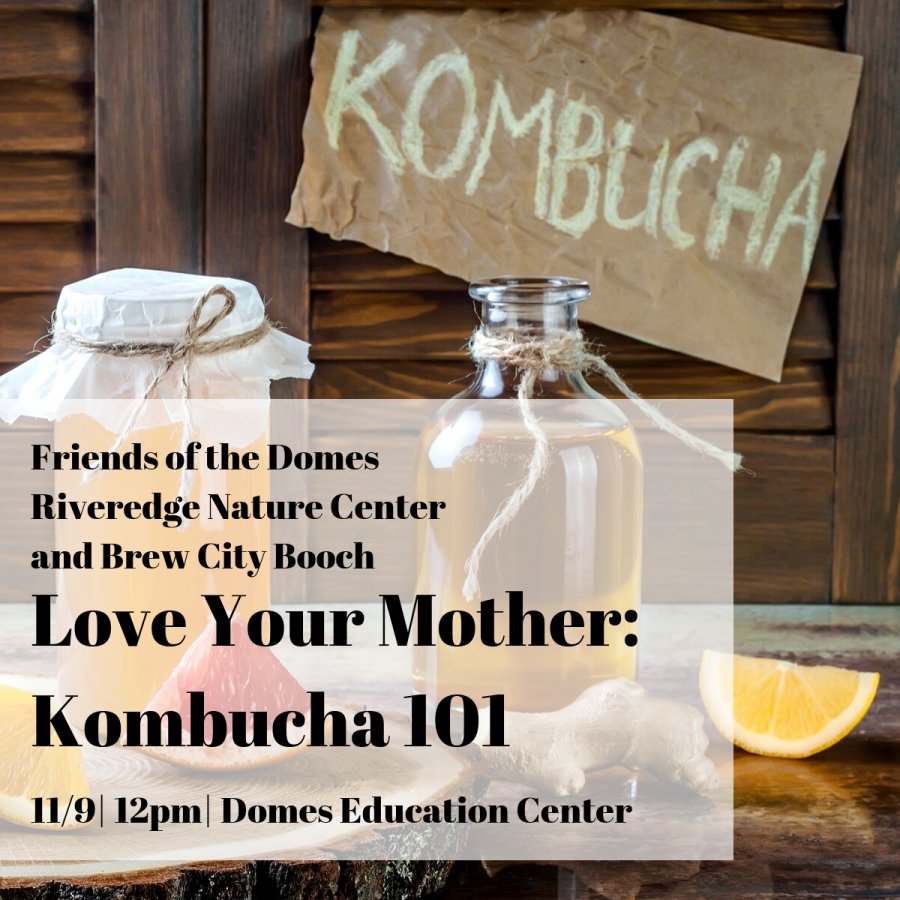 Love Your Mother: Kombucha 101