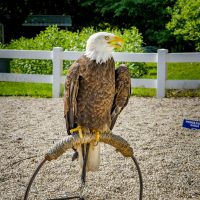 Reduced Admission - $4 on the 4th of July