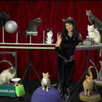 Acro-Cats Celebrate Halloween in Spooktacular Style